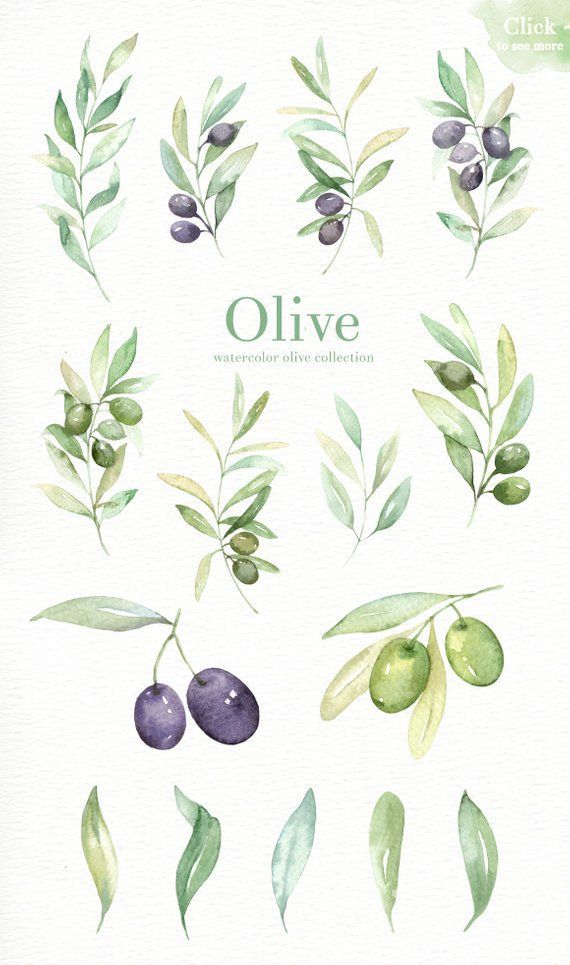 Photo of Olive Watercolor Clipart, Green leaf, Hand painting olive art,Laurel wreath, DIY…