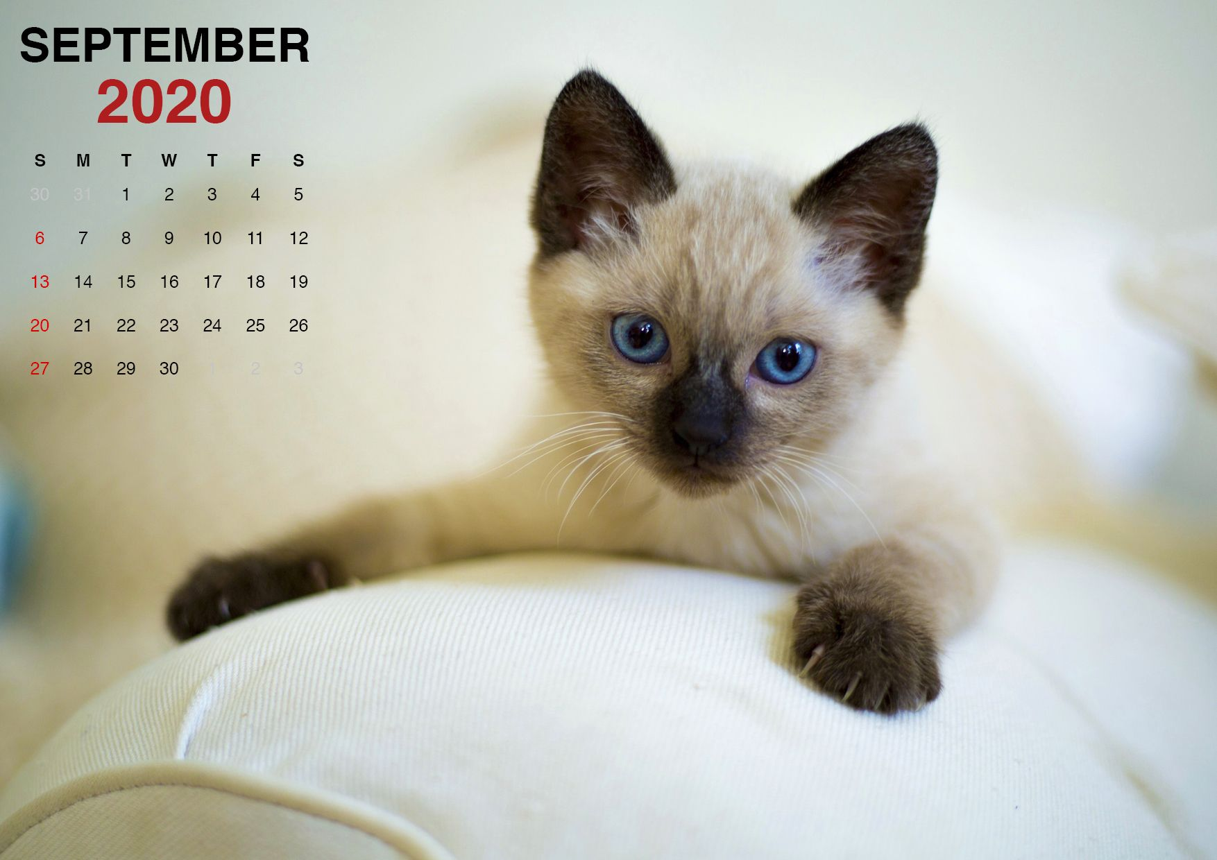Kittens September 2020 Calendars Wallpapers In 2020 Cat Breeds Cats Cat Posters