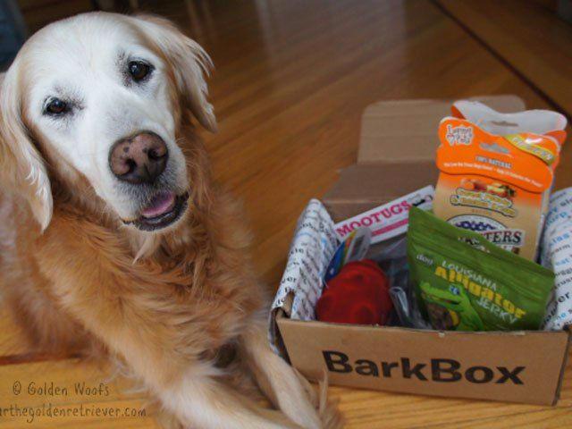 Watch All You Is Now A Part Of Southern Living Bark Box Dog