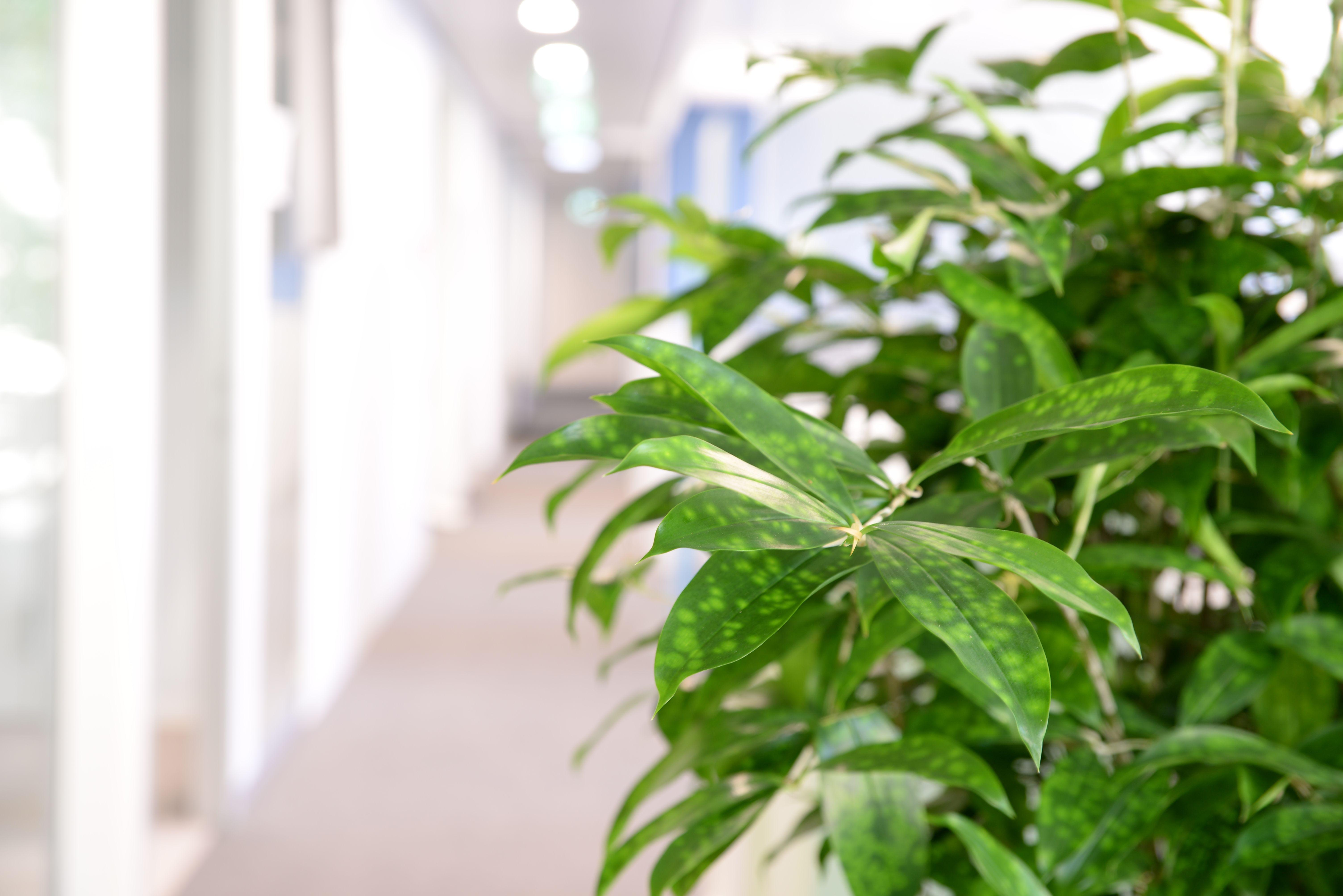 Der grüneEyecatcher für lange Büroflure