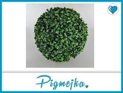 Bukszpan Wyjatkowo Gesta Kula Bukszpana Duza 18 Cm 5119148453 Oficjalne Archiwum Allegro How To Dry Basil Herbs Basil