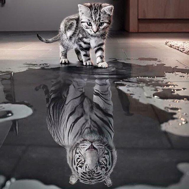 Chat reflet tigre recherche google projets essayer for Reflet dans le miroir