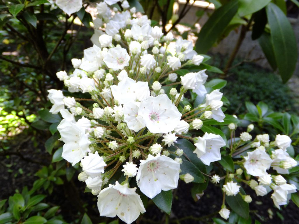 White Flowering Shrubs With Flowers Make Sure To Visit