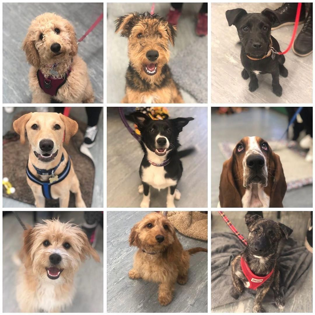 Very Well Done To This Gorgeous Bunch For Graduating From Puppy