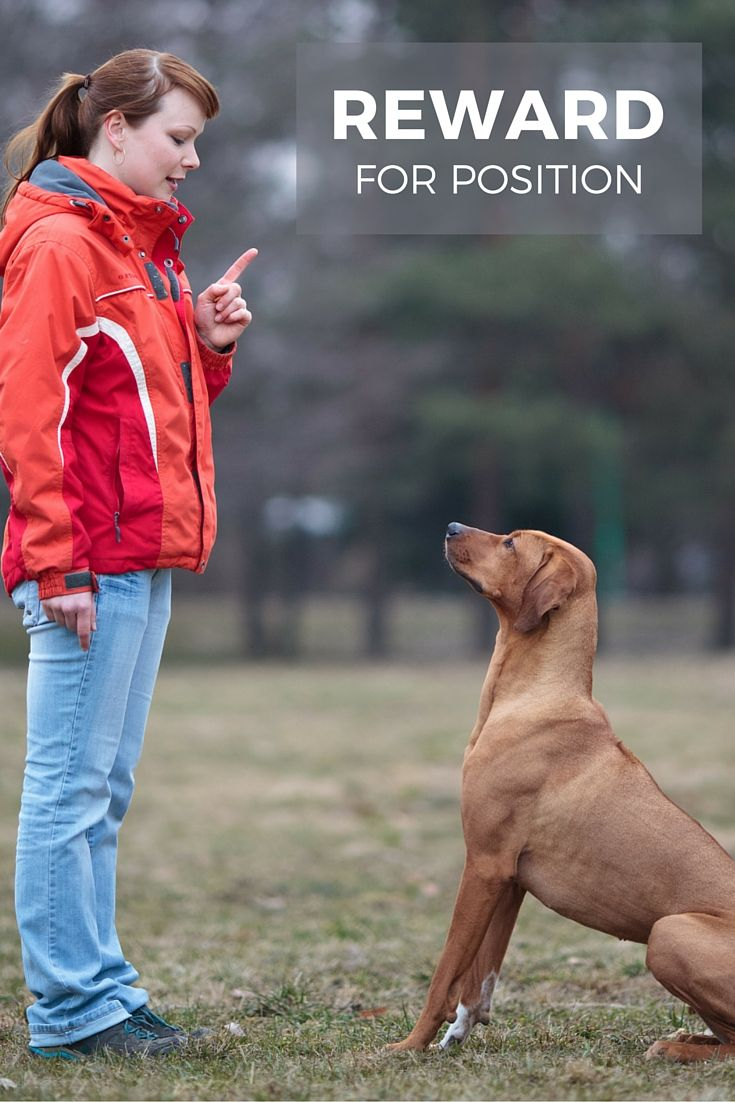 Rewards – An Important Part of Dog Training