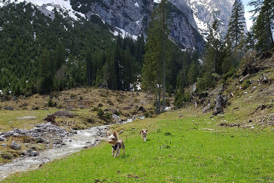 Wanderung Mit Hund Musauer Alm Blog Reutte Hunde Wanderung Wandern
