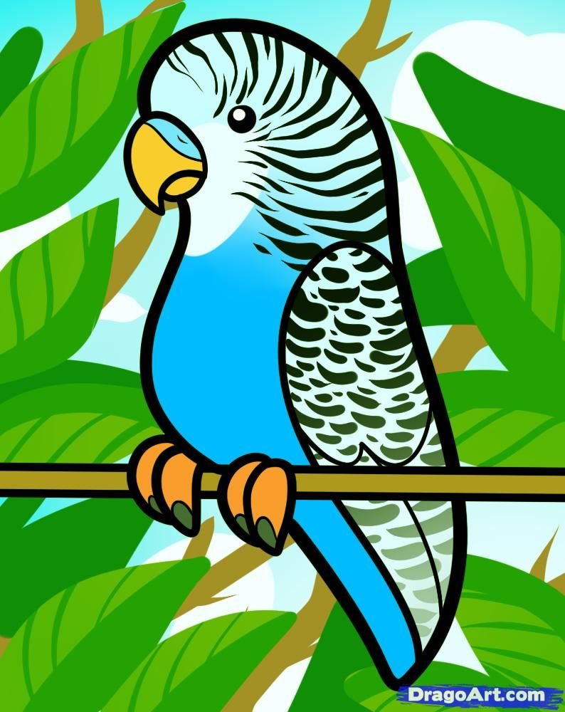 how to draw a parakeet for kids