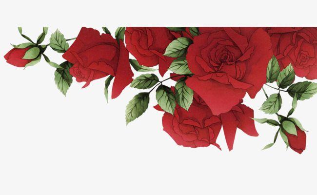 Romantic Red Roses Border Red Rose Clipart Free Material Material Png Transparent Clipart Image And Psd File For Free Download Flower Border Clipart Flower Wallpaper Flower Border