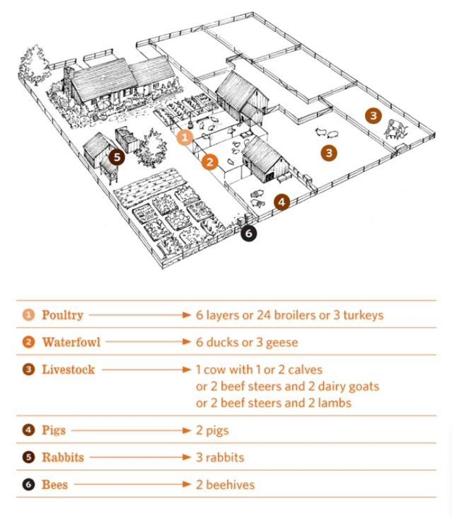 Layout Of A Half Acre Homestead Farm Layout Acre Homestead Homestead Layout