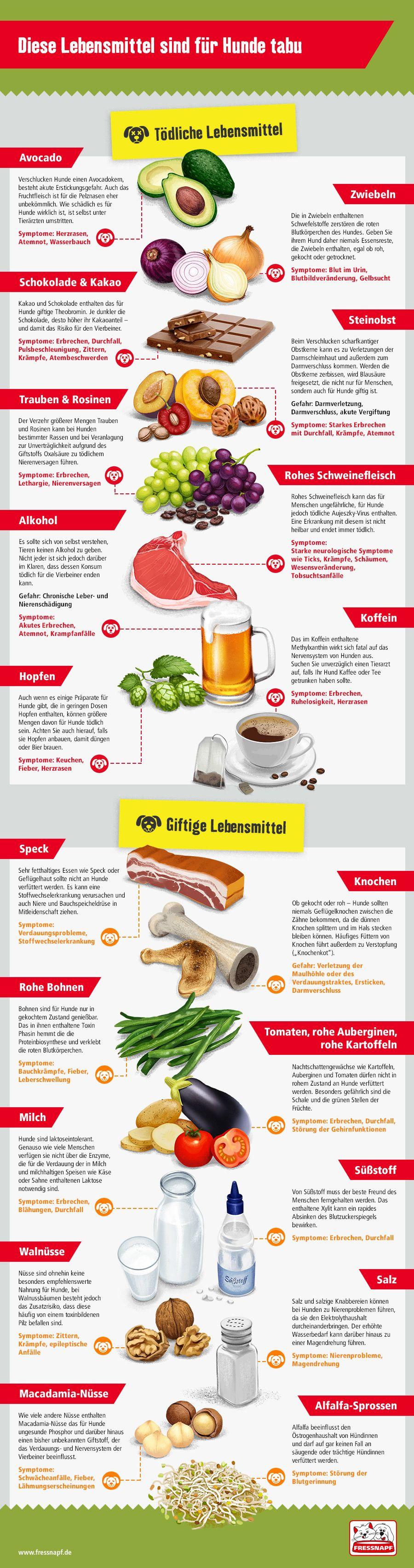 Giftige Lebensmittel Fur Hunde Fressnapf Deutschland Giftige