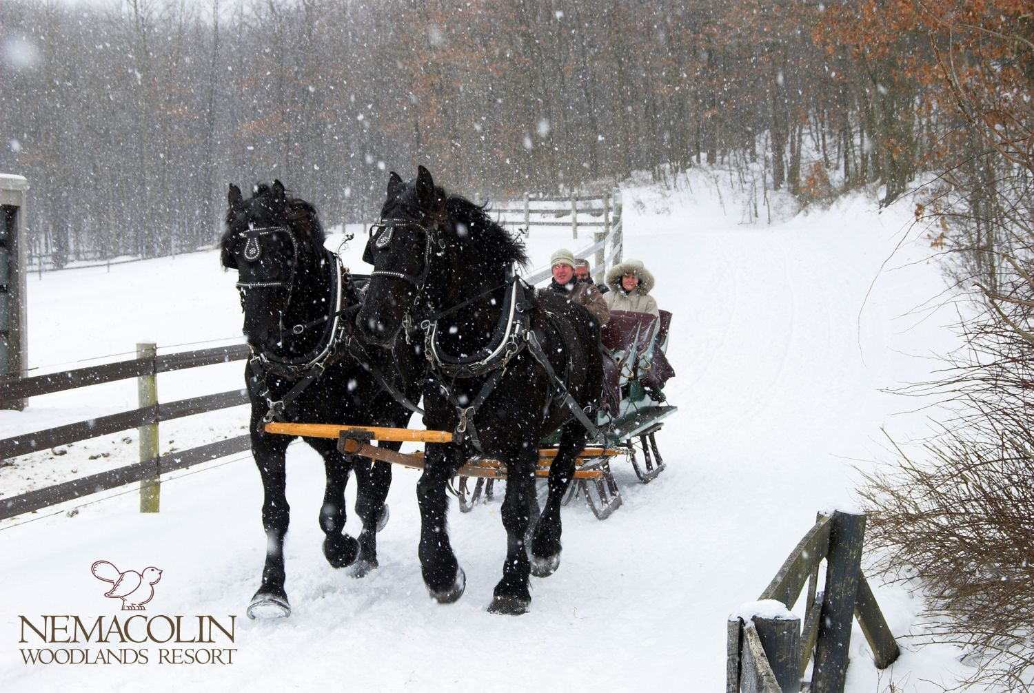 New Carriage Rides Property Tours And Shuttle Service Woodlands Sleigh Ride Horses