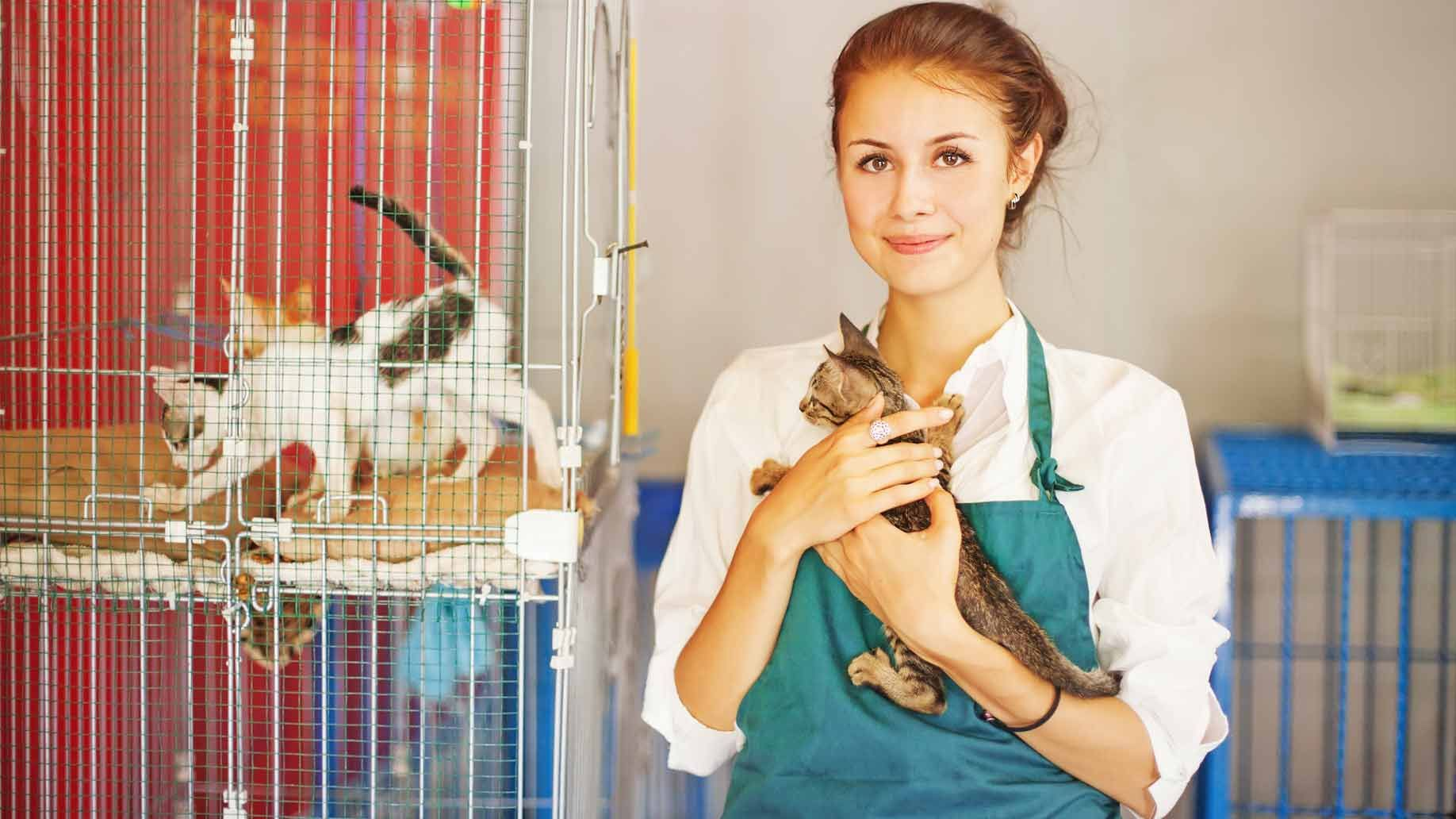 15 Best Part Time Jobs For High School Students Animal Shelter Cat Shelter Pet Adoption