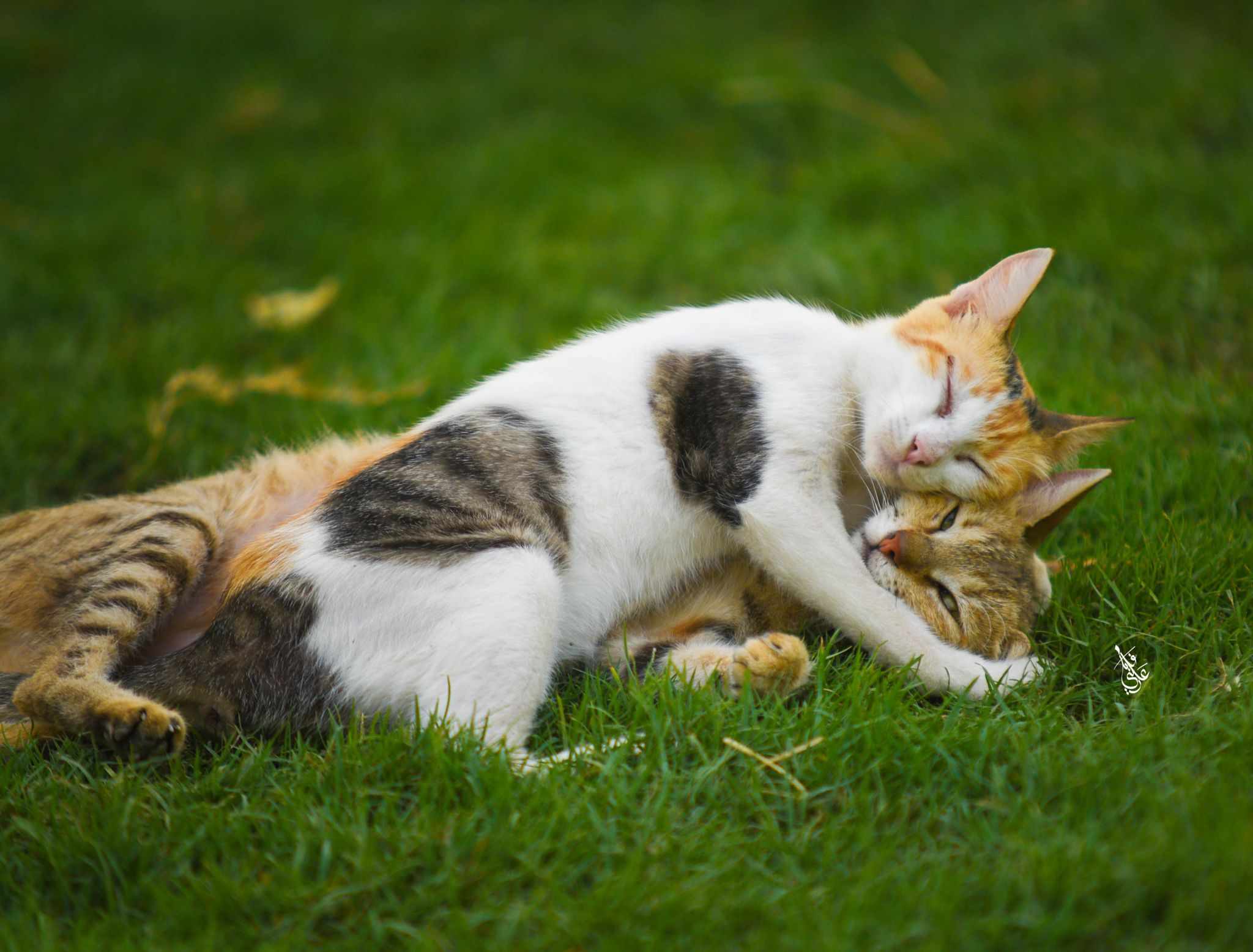 Tenderness Cute Cats Cats And Kittens Kittens Cutest