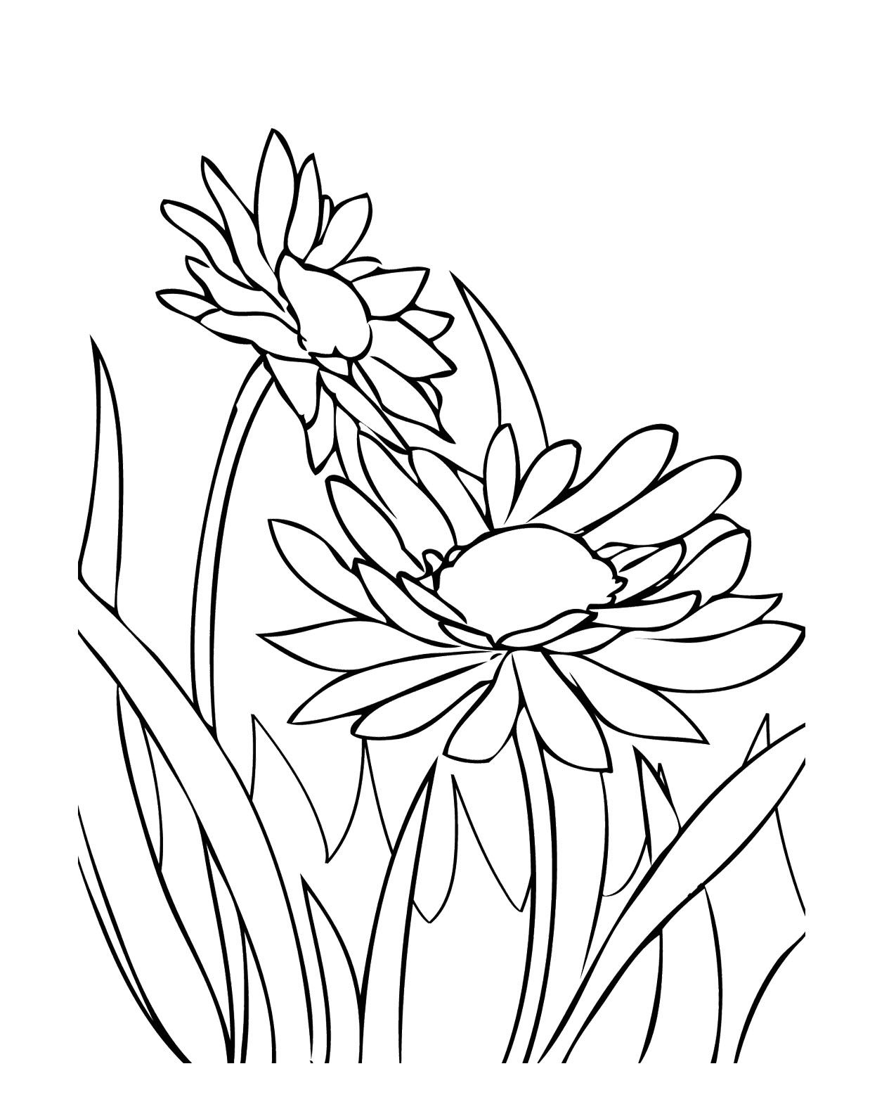 Growing Spring Flowers Coloring Pages Mosaic Patterns