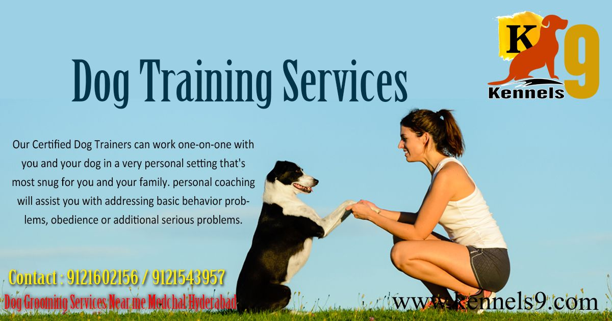 Dog Training Services In Kennels9 Dogs Boarding And Training