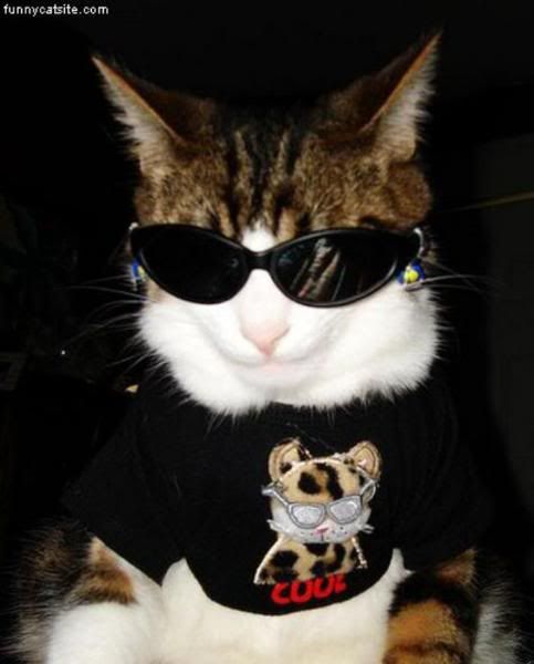 Крутые коты в очках картинки