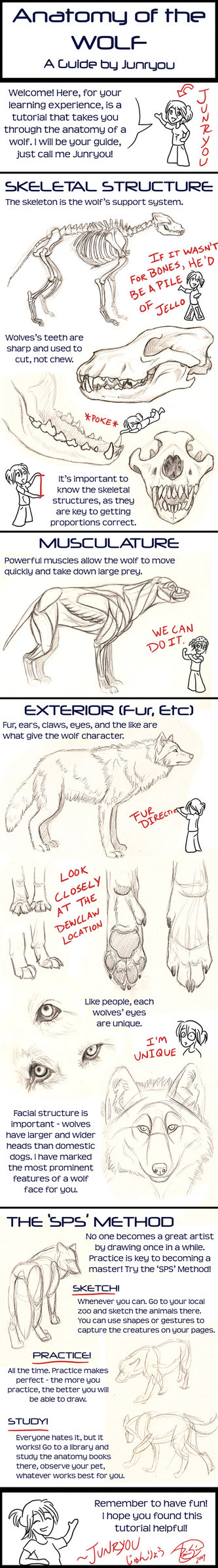 Anatomy Of A Wolf A Tutorial By Junryou Na Kokoro On Deviantart