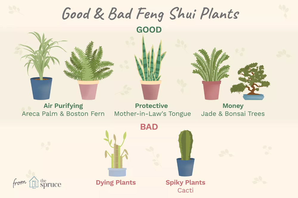 What Are The Good And Bad Feng Shui Plants In 2020 Feng Shui Plants Feng Shui Bedroom Feng Shui Indoor Plants