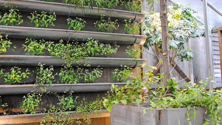 These Vertical Gardens Are Perfect for Small Spaces   Gutter ... on rain gutter gardening larry hall, gutter gardening larry hallrain designs, rain gutter gardening books, rain gutter gardening supplies,