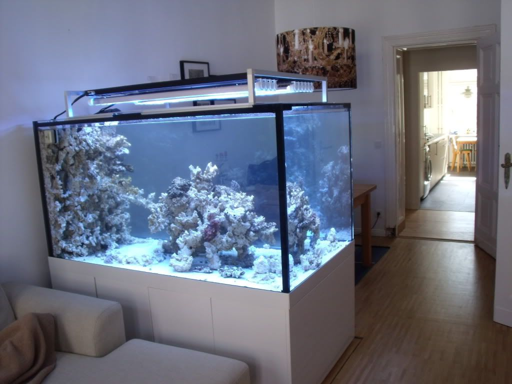 Aquascaping show your skills look at the stand reef tank pinterest acuario peceras - Peceras de diseno ...