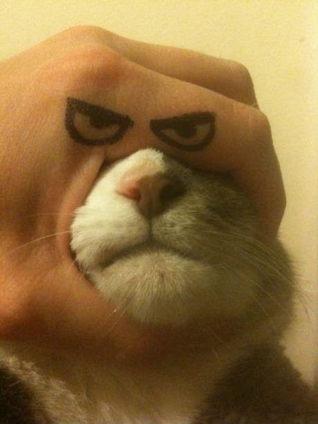 Epic cat. #funny #cat