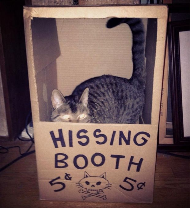 Hissing Booth. Approach with caution! LOL!