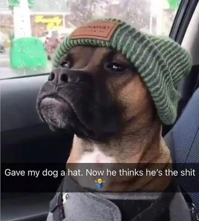 Afbeeldingsresultaat voor honden memes