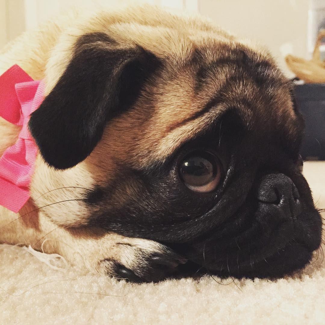 Saturdazzze Happy Weekend Friends Cute Pugs Pugs Pug Love