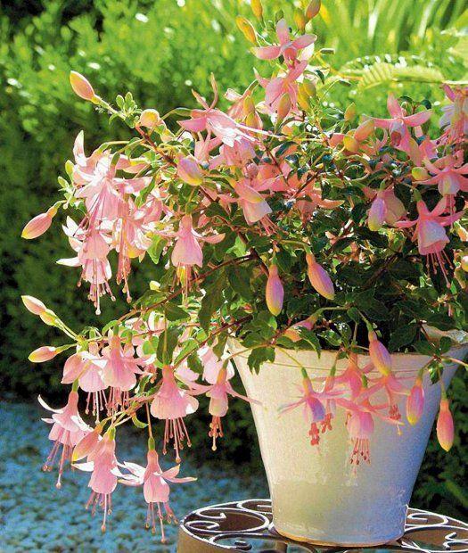 Pin By Ania Kwiatek On Balkony Flower Garden Balcony Garden Plants