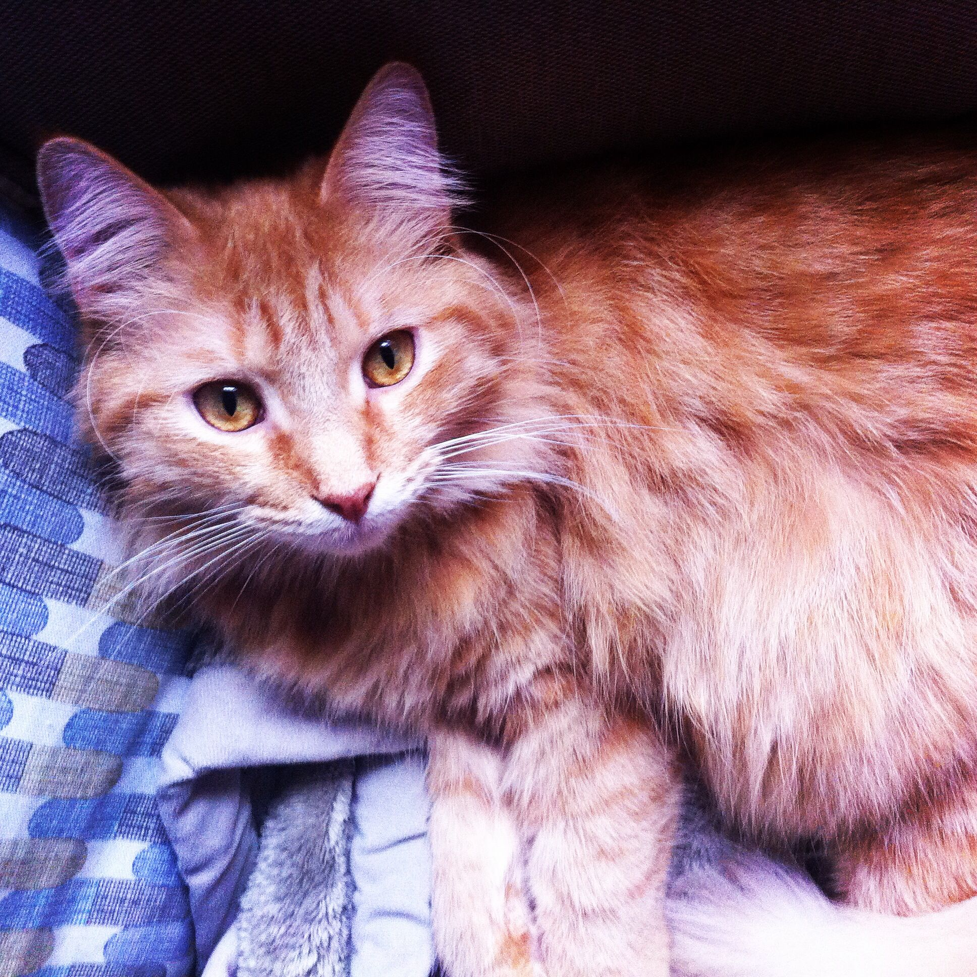 Kitty cat Charley
