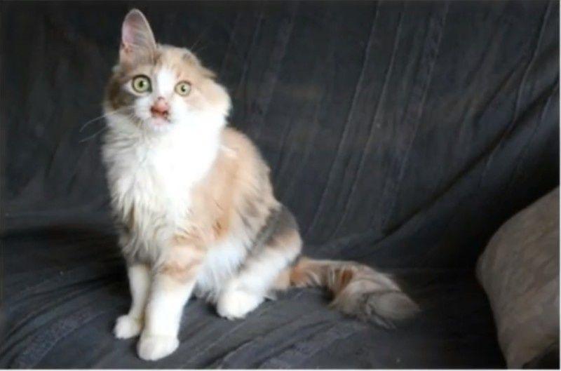 deformed-cat-10
