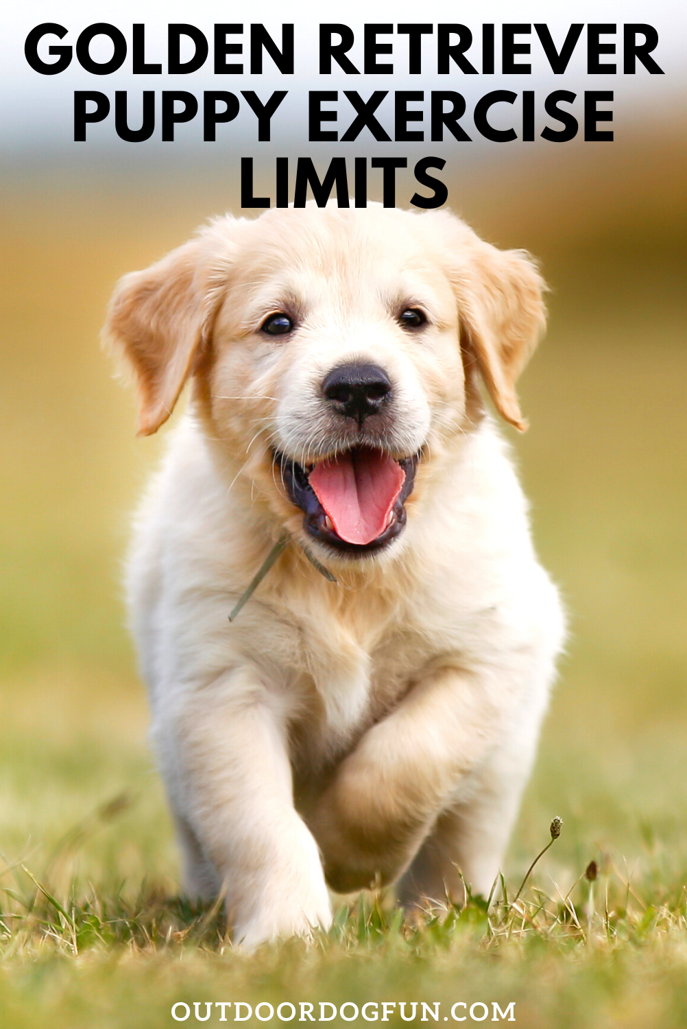 Golden Retriever Puppy Exercise Limits You Need To Know In 2020 Puppy Training Dog Training Puppy Training Classes