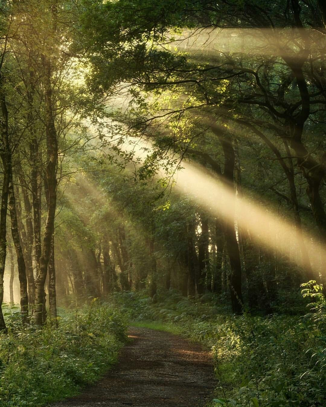 Beams Of Light Filtering Through The Trees With Images Nature