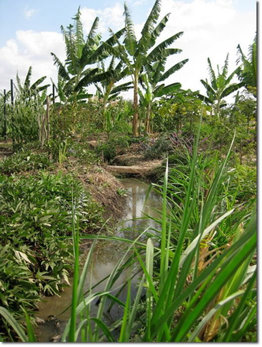 An Innovative Approach to Water Storage at a Sustainable Tanzanian Home - The Permaculture Research Institute