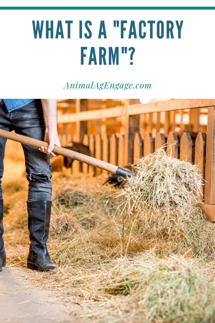 "What is a ""Factory Farm"" Factory farming, Farm, Animal"