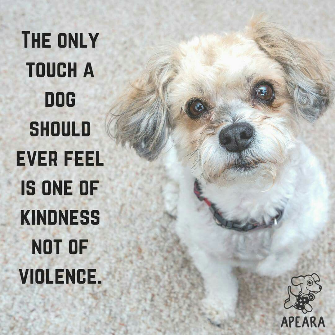 Animal Cruelty Quotes This Dog Has Sophie's Eyes  Intense Dogs  Pinterest  Dog