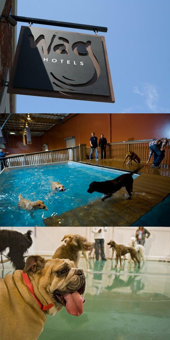 Wag Hotels Is One Of The Big Ones In Ca Locations In Sacramento And San Francisco Super Posh Dog Daycare Design Dog Daycare Pet Hotel