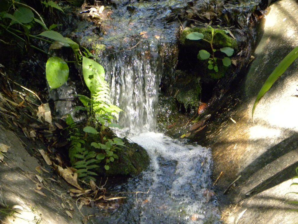 Leu gardens orlando wedding venues waterfall nature