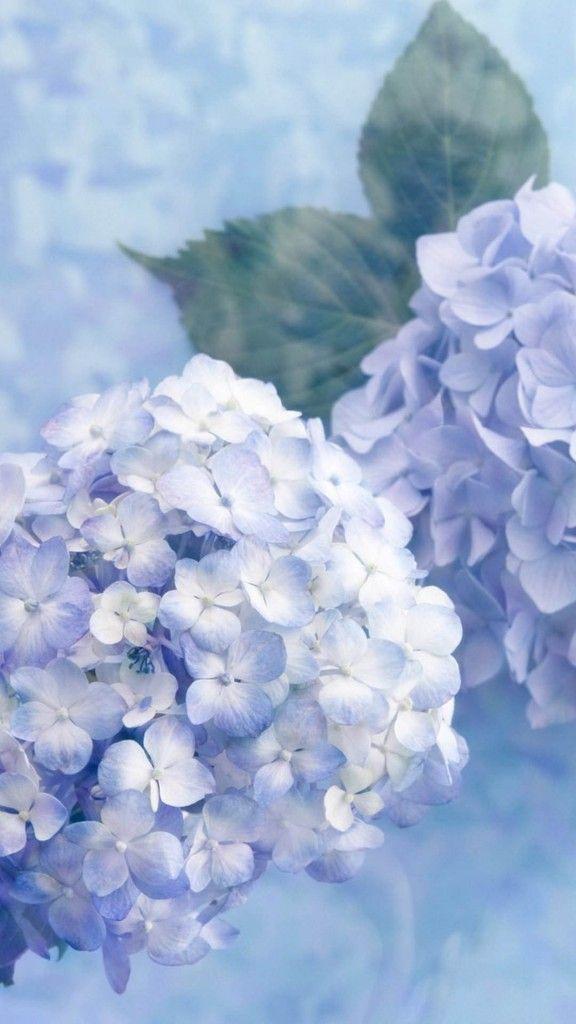 Hydrangea Flower Pastel Beauty Followback Photooftheday Tagforlikes Hydrangea Wallpaper Aesthetic Wallpapers Flower Wallpaper