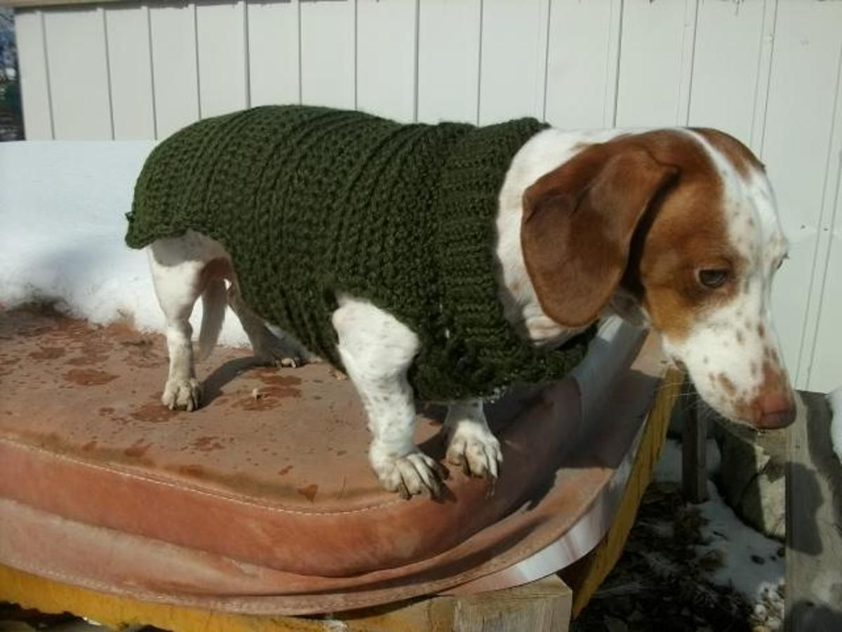 Dachshund, Small Breed or Cat Sweater | Crocheting patterns, Knit ...