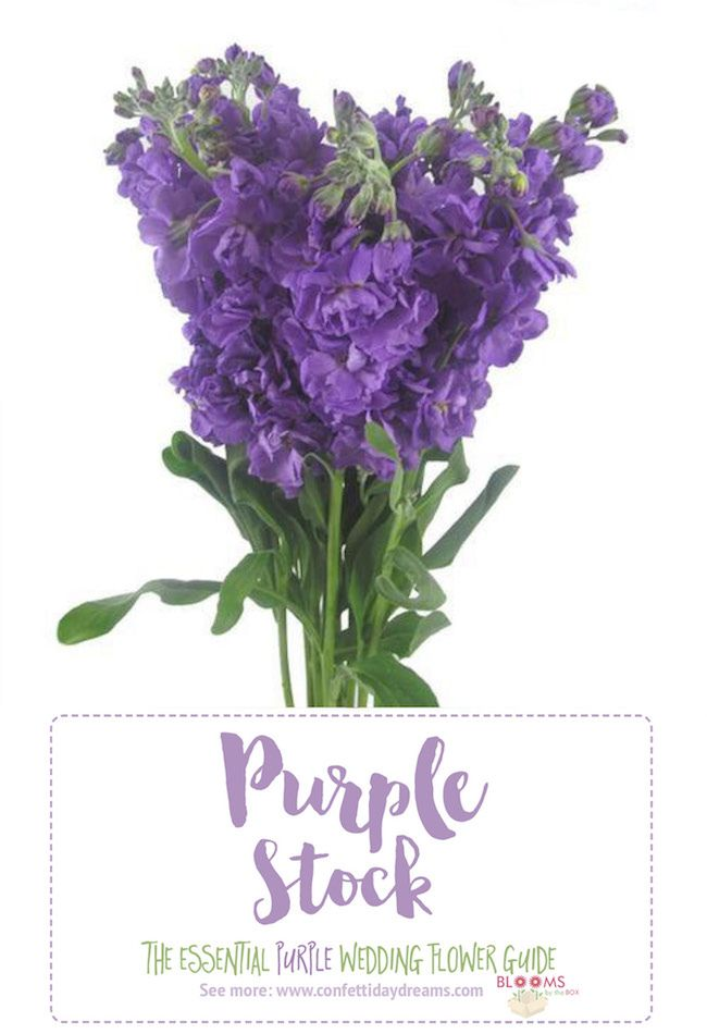 Complete guide to purple wedding flowers purple flower names pics purple wedding flowers mightylinksfo