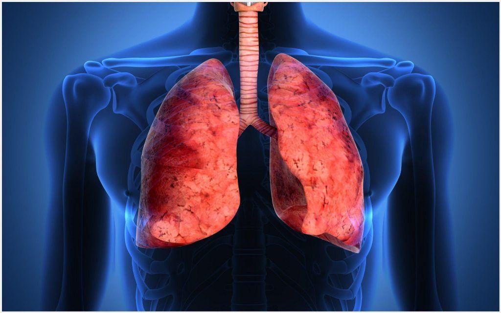 Human Lungs Biology Wallpaper | human lungs biology wallpaper 1080p ...