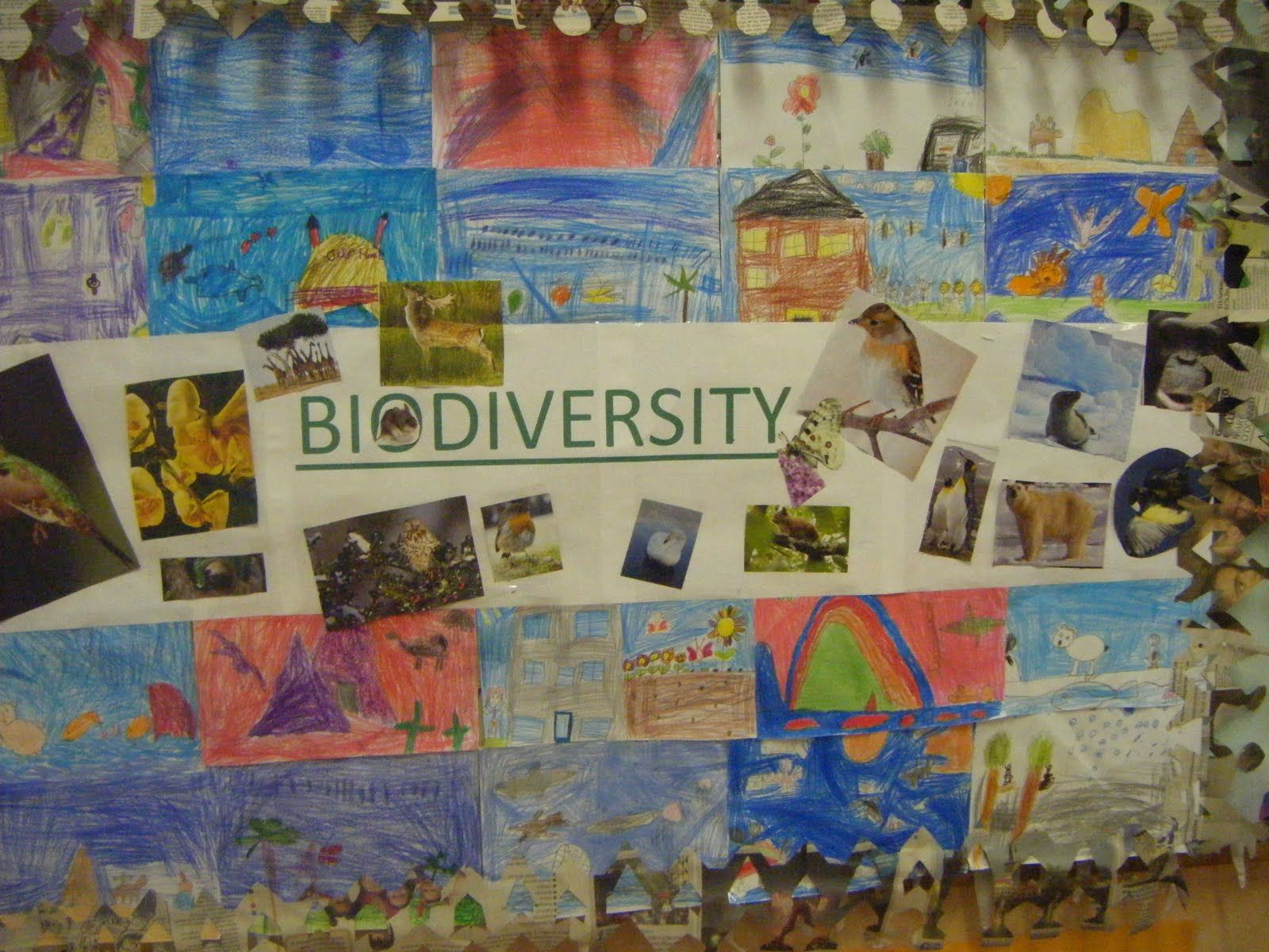Biodiversity Poster Competition Poster Competition Green School