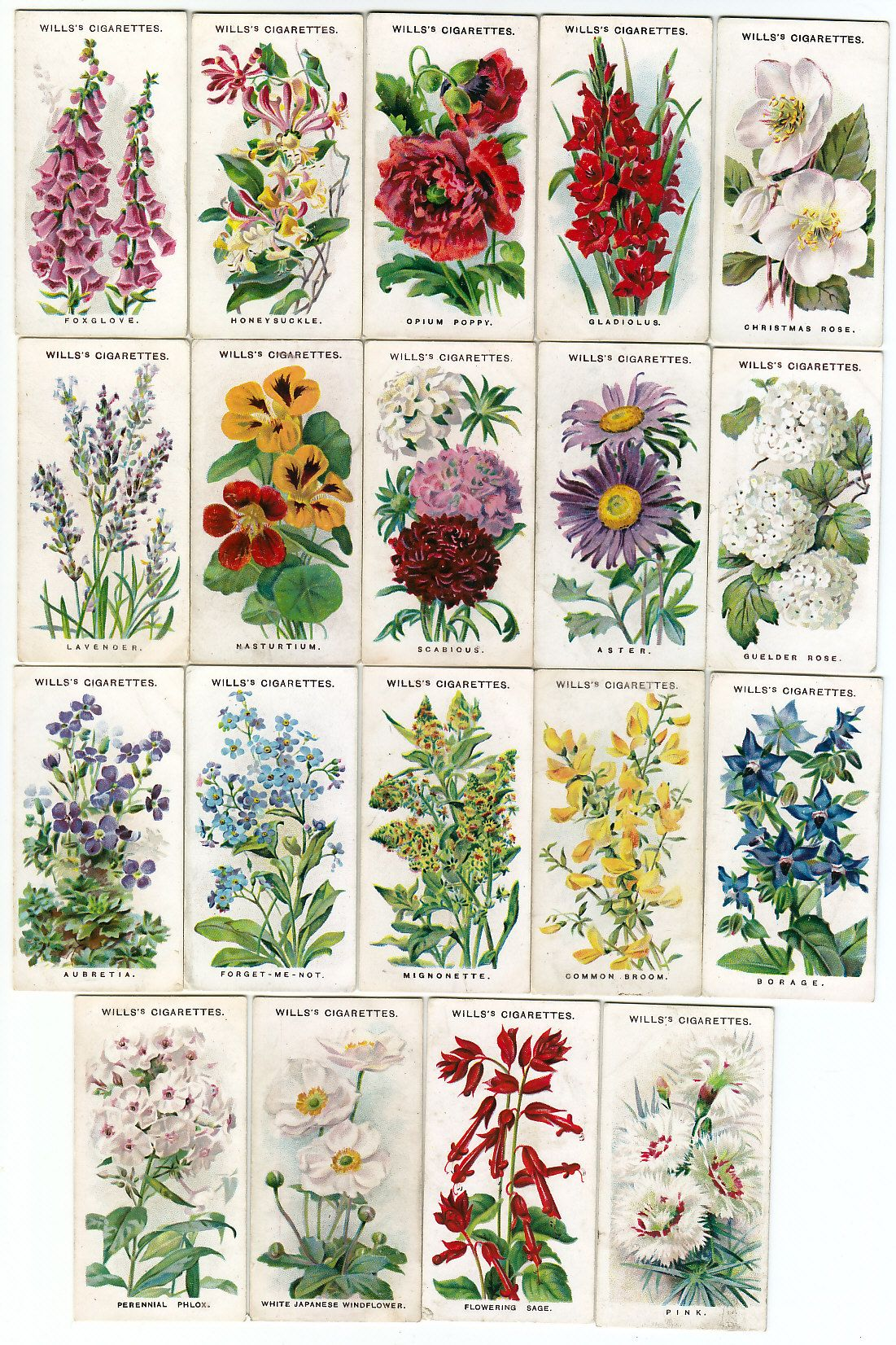 Garden flowers names - Flower Names And Illustrations Of Traditional English Cottage Garden Flowers