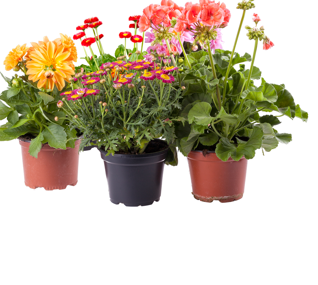 32  Beauty Potted Plants And Flowers for potted plants and flowers png  61obs