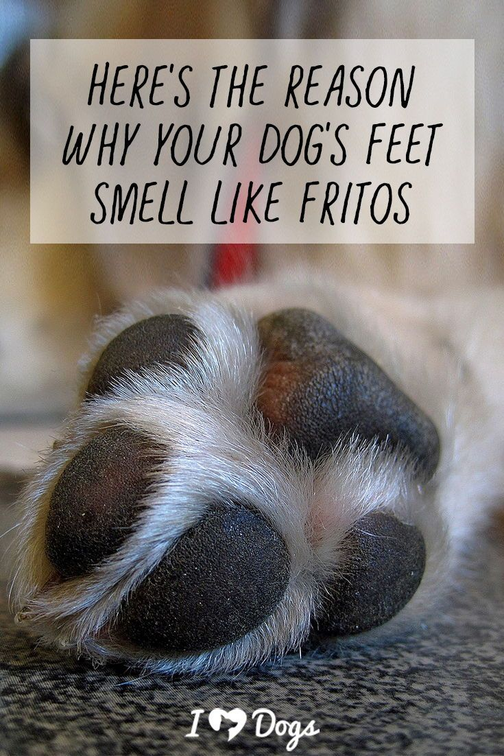 Heres the reason why your dogs feet smell like fritos
