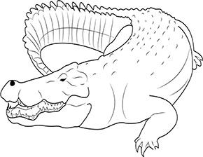Ausmalbild Krokodil Im Zoo In 2020 Ausmalen Zootiere Ausmalbilder Tiere
