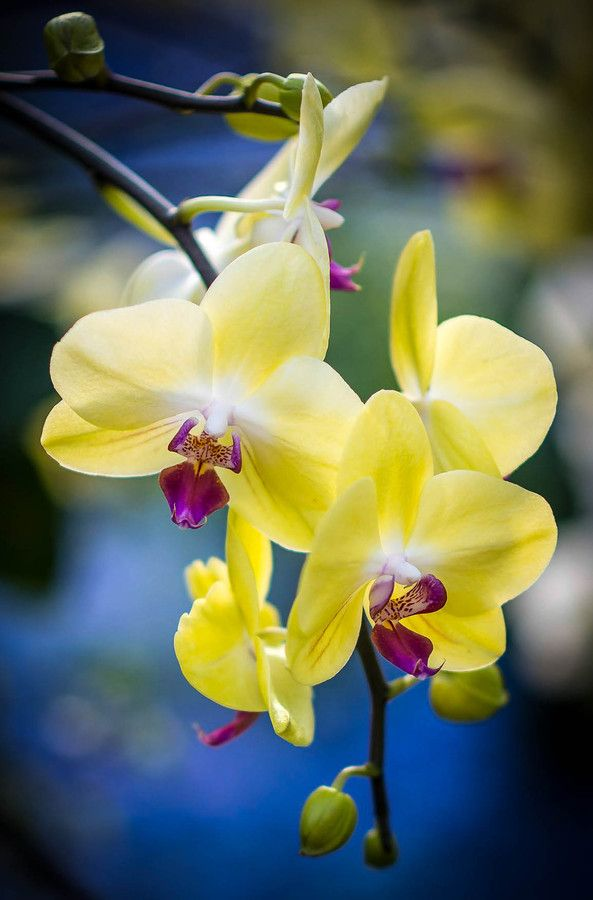 Yellow Orchid with Vignette by Erica Thompson on 500px