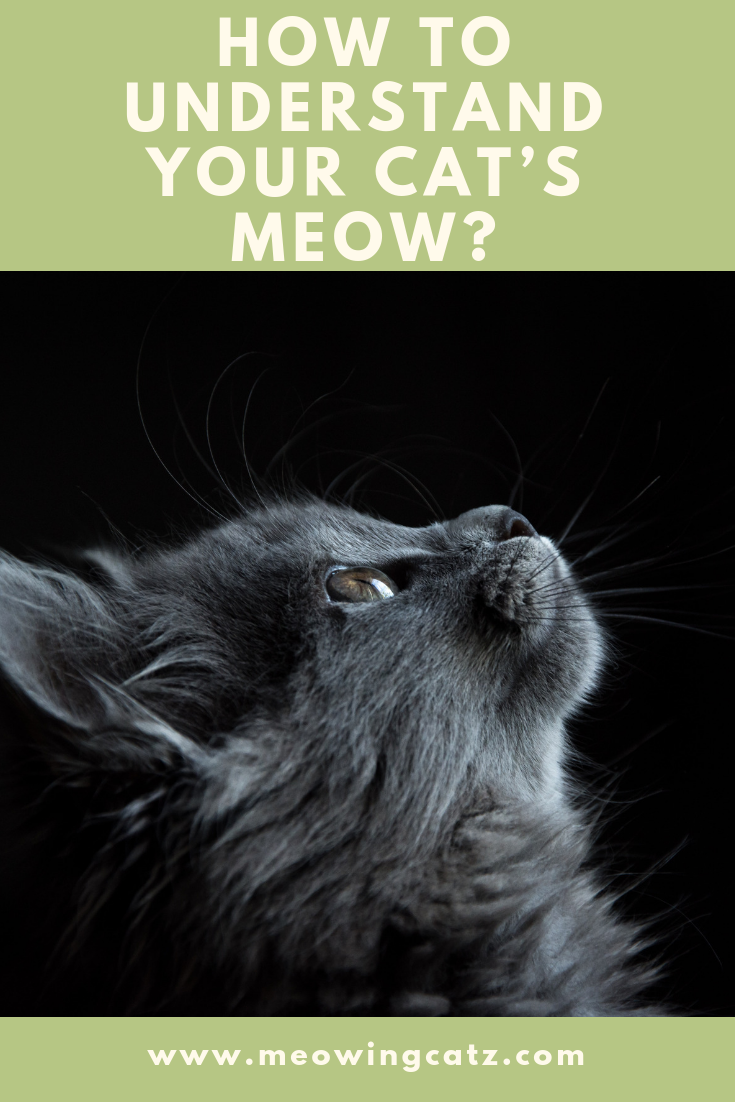 The Cat S Meow Understanding Your Feline Friend Cat Care Cats