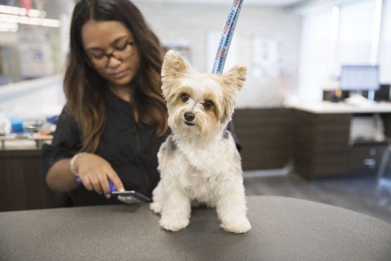 Grooming boosts dog health pet parent pet grooming pets